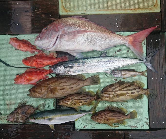海毛虫チューン「フォーチューン毛虫」テスト釣行